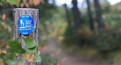 Trail marker in the Pine Bush Preserve