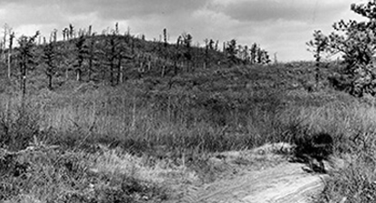 historic photo of an unpaved Old State Road and the surrounding pine barrens