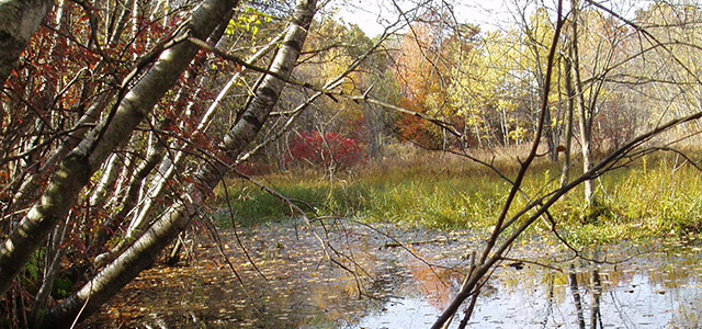 Pine Barrens Vernal Pond with water and vegetation