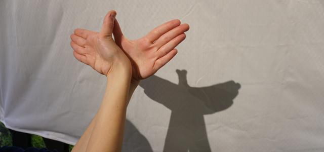 bird shadow puppet