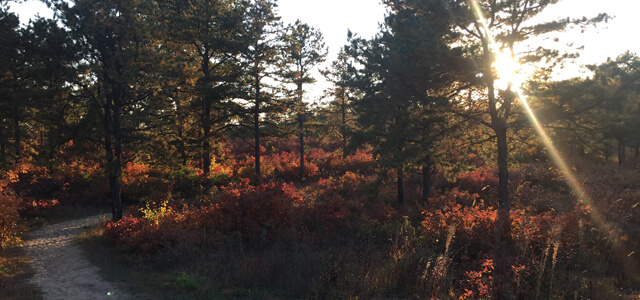 Sunrise in the pine barrens
