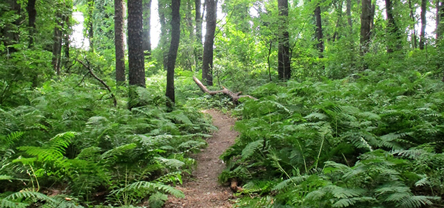 Forest with ferns