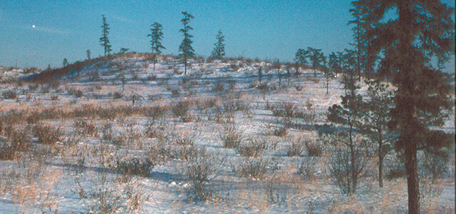 Snowy Albany Pine Bush landscape from 1968