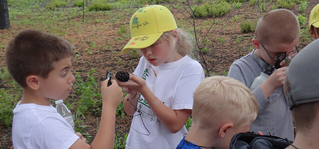 Young students looking at pitch pine cones