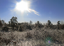 Sun shining over winter Pine Bush landscape
