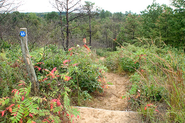 Trail going down sand dune in the Albany Pine Bush