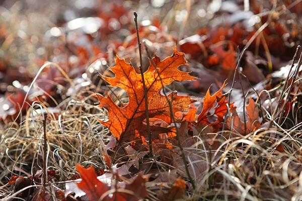 An orange fall leaf on the ground