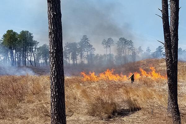 fire burning on landscape