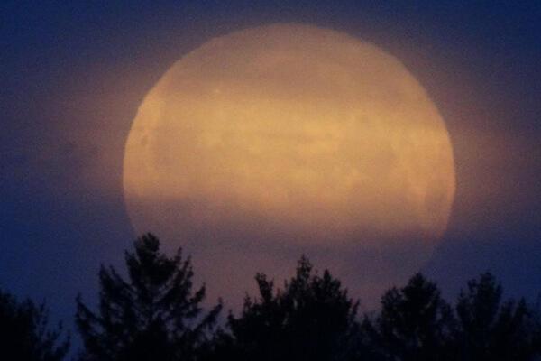 Full moon rising over trees