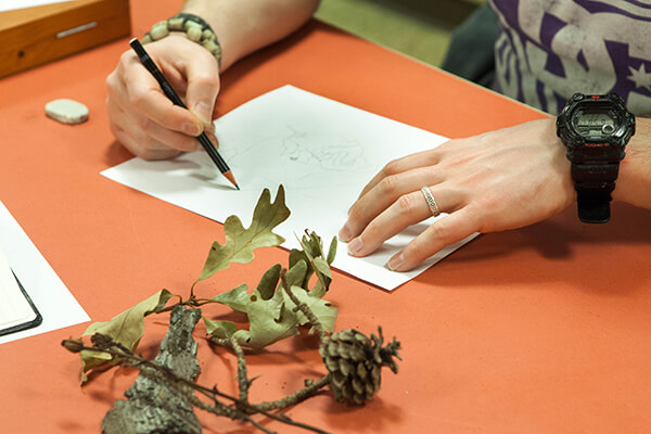Hands of person drawing and branch with leaves and pine cone