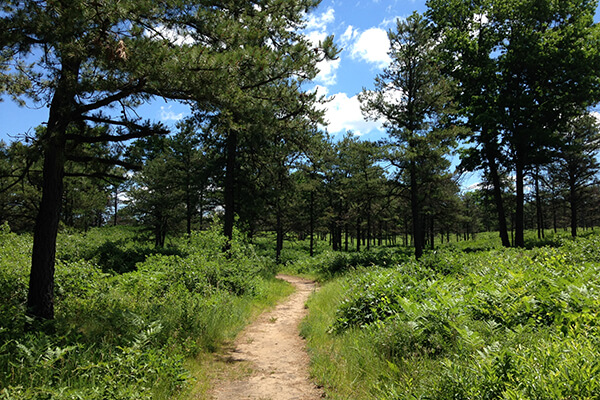 trail going through Pine Bush landscape