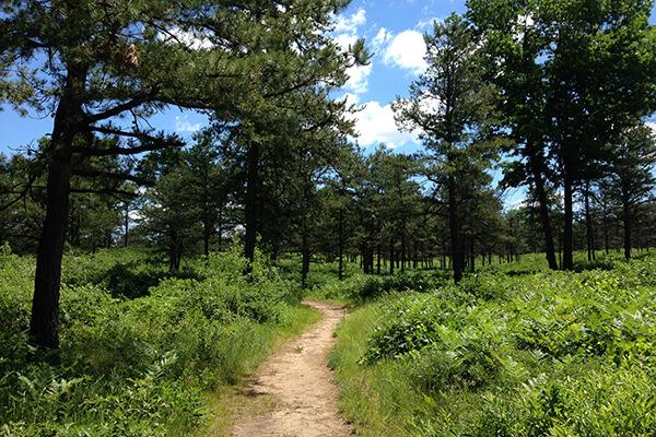 Pine Bush landscape with trail