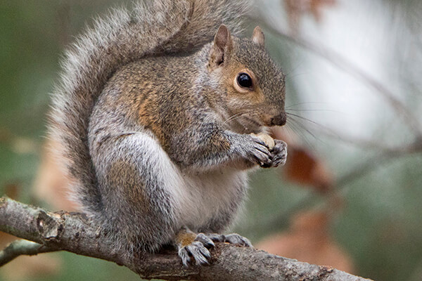 Squirrel sitting on branch