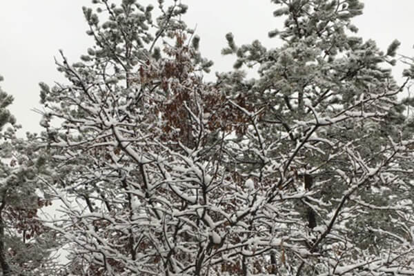 Snow covered branches in a snowy landscape