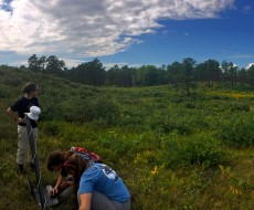 An image of Albany Pine Bush employees checking research equipment out in the pine barrens