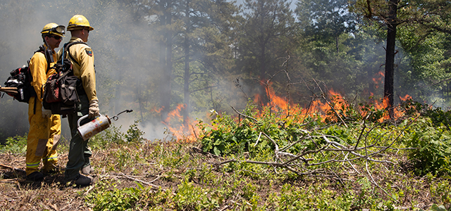 Prescribed fire crew along a trail.