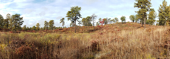Beautiful rolling sand dunes in a Pine Barrens landscape