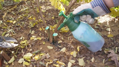 A gloved hand holding a can of glyphosate applies the herbicide directly to a cut sapling stump.