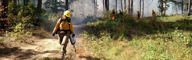 A woman wearing Nomex and carrying a drip torch ignites vegetation along a fire break.