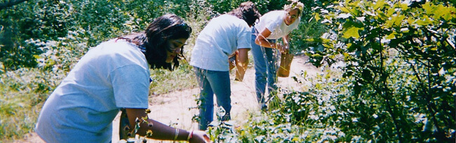 Three volunteers collecting seeds from native plants along a trail in the preserve.