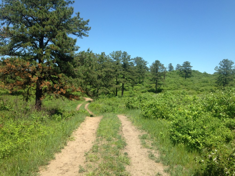 Truax Trail Barrens