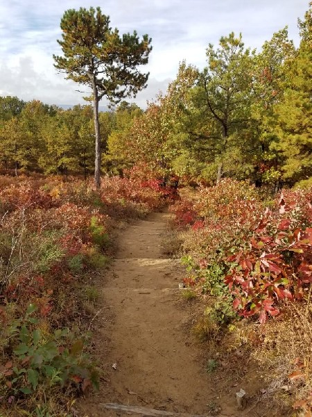Karner Barrens in autumn