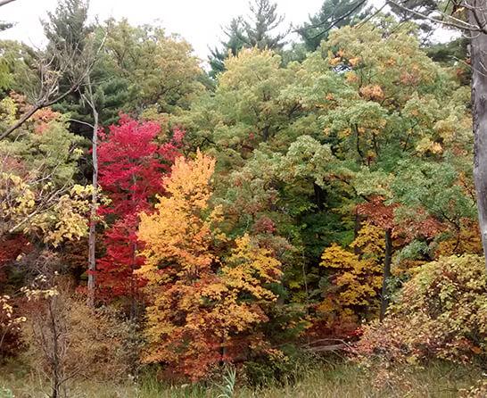 Pine Bush forest