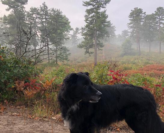 A dog on a hiking trail