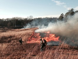 A prescribed fire being conducted in a field by prescribed fire crew