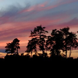 Pine Bush sunset