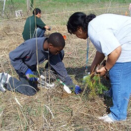 Volunteers planting tree seedlings on Earth Day.