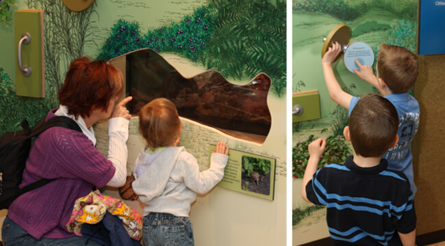 People in the Discovery Center watching a native turtle and exploring hands-on exhibits.