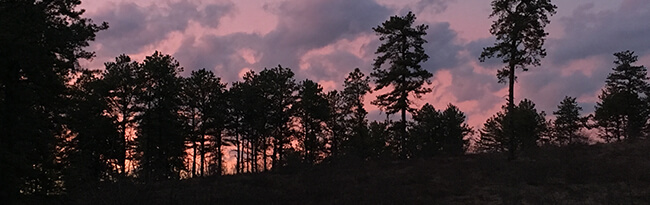 Pine barrens at sunset